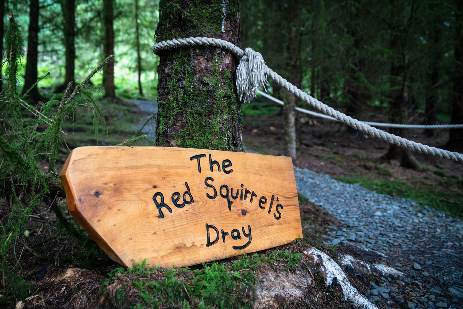 Red Squirrel's Dray