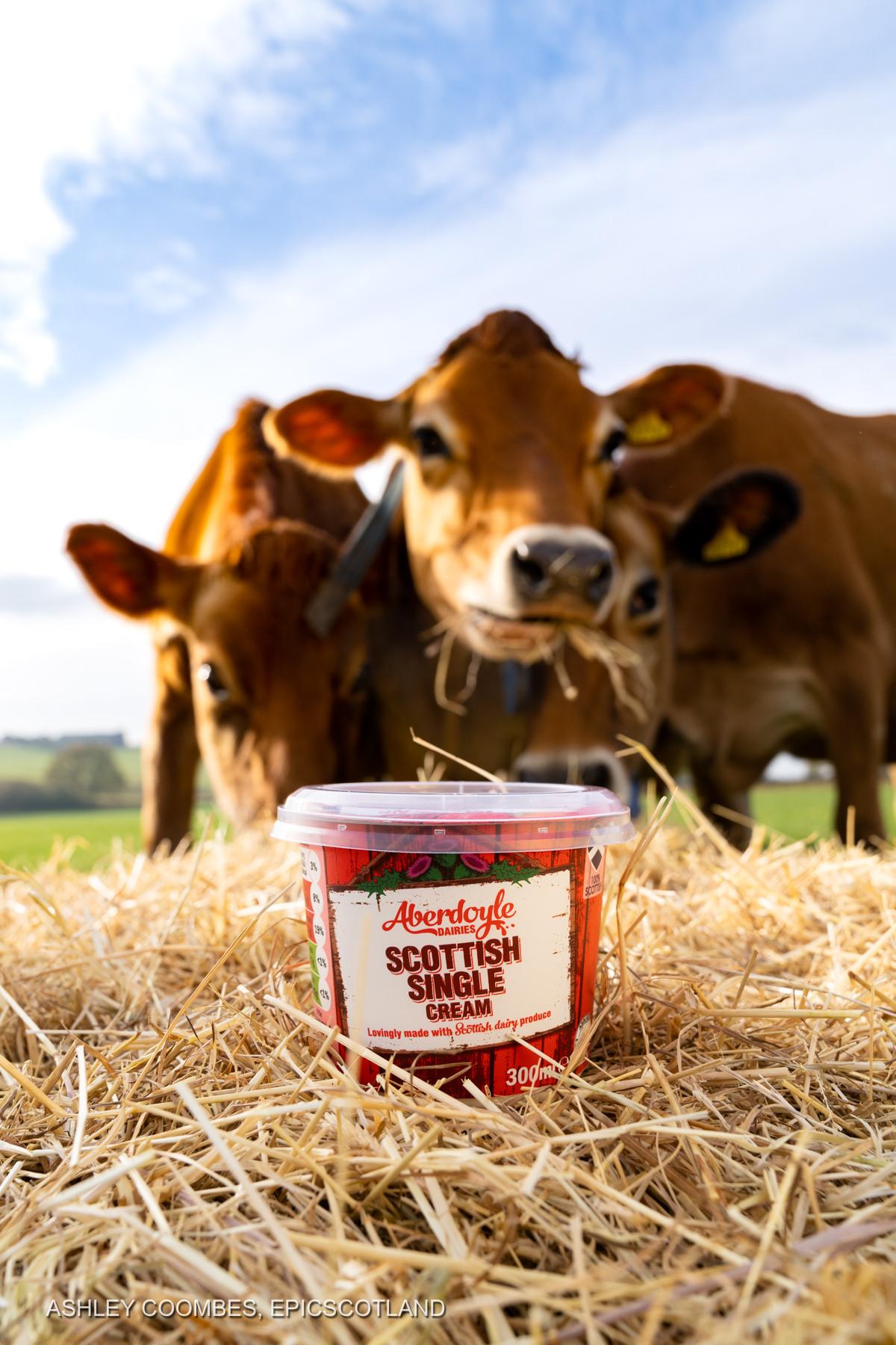 Aberdoyle Scottish Single Cream with cows