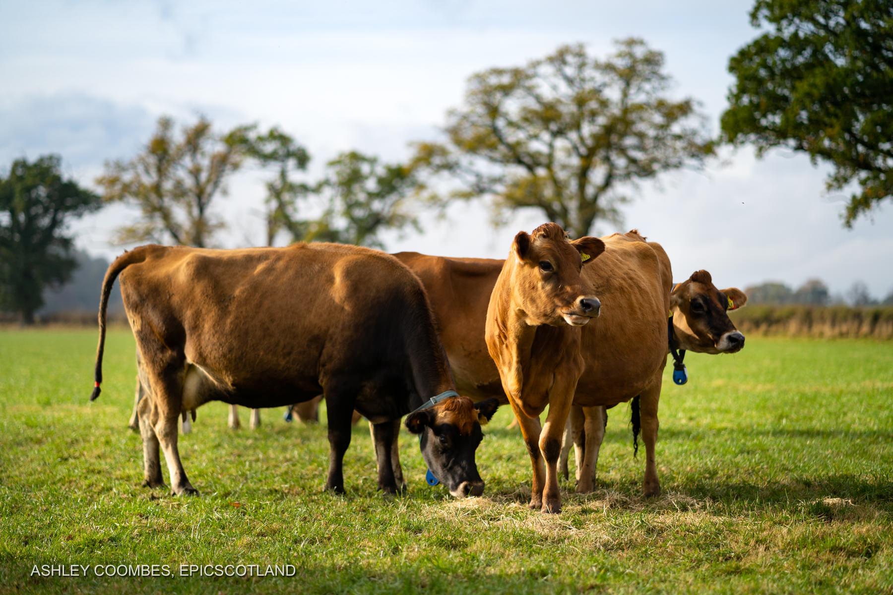 Graham's Dairy Farm Epic Scotland Photography