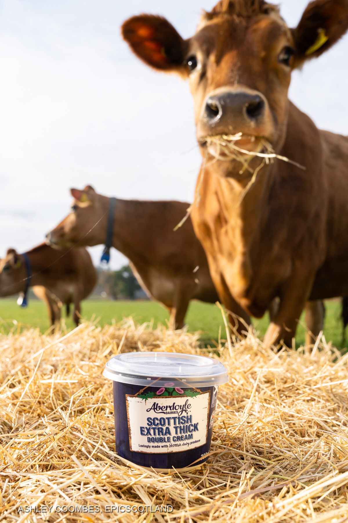 Product photography Graham's Dairy Farm